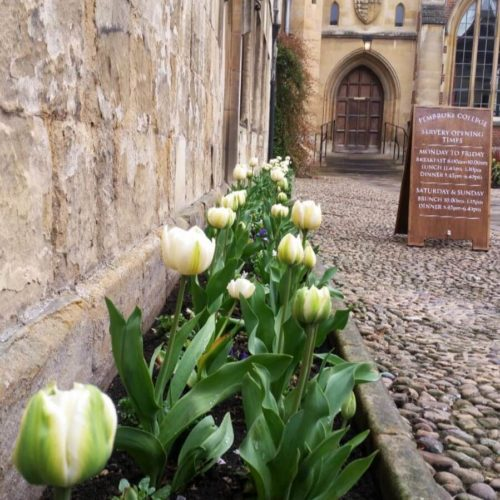 Tulips at Cambridge University